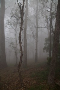 Misty forest near Jenolan Caves