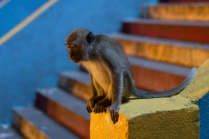 A monkey at the Batu Caves