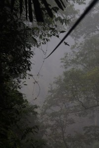 Zipline in the early morning mist