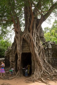 More temple-eating trees