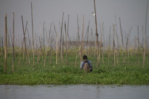 A farmer in the floating gardens