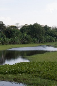 The citadel moat, looking like Vietnam should look